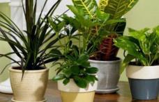 Plante care elimină substanțele poluante dintr-o cameră