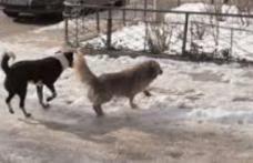 """Primim la redacție – """"Câinii fără stăpân din Dorohoi sunt un real pericol pentru populație"""""""