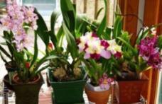 Ingredientul secret care se pune la rădăcina florilor ca să nu se ofilească
