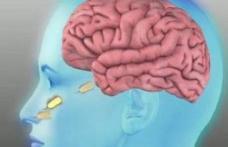 Amiba care se hrăneşte cu creier uman a ucis trei oameni
