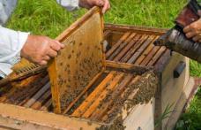 Sprijin financiar pentru investiții în apicultură