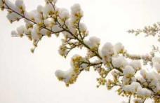 Alertă meteo! Vremea schimbă foaia! Nu te-ai fi aşteptat să fie aşa de Florii!