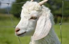Români condamnaţi la închisoare după ce au ucis o capră la grădina zoologică din Berlin, ca s-o mănânce