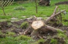 Pomul din curtea ta pe care nu ai voie să îl tai. Rişti o amendă de 10.000 de lei