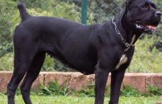 Amenzi aplicate de jandarmi pentru nerespectarea legislaţiei privind câinii