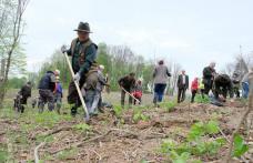 Luna curățeniei marcată cu o acțiune de plantare puieți, cu 50 de funcționari din administrația botoșăneană - FOTO
