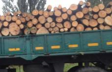 Transport de lemne, cu iz penal descoperit de Poliţiştii Biroului Rutier Dorohoi