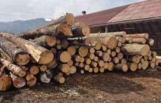 Firmă din Havîrna, prinsă cu ocaua mică la transportul de lemne! A fost amendată drastic și lemnul i-a fost confiscat