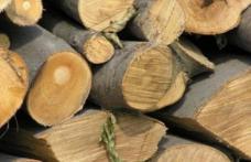 Material lemnos fără documente confiscat de polițiști