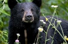 O femeie a lovit un urs în nas, după ce a încercat să îi fure câinele