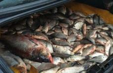 Dosar penal pentru braconaj piscicol: Au pescuit ilegal 30 de kilograme de peşte din acumularea piscicolă