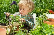 Plante pe care să nu le ții în casă când ai un copil mic