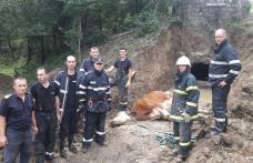 Misiune dificilă a pompierilor din Botoșani încheiată cu succes - FOTO