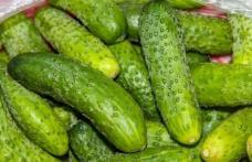 Alertă alimentară: tone de castraveţi contaminaţi au fost retrase de pe piaţă