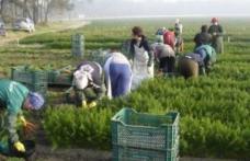 Locuri de muncă sezonieră în agricultură - Spania – pentru campania 2019