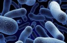 O bacterie distruge cancerul fără operaţie