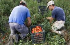 Încă un caz de sclavie în Italia: doi români arestaţi, 30 de persoane abuzate