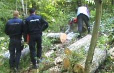 Hoţi de lemne prinşi la locul faptei. Un bărbat şi o femeie depistați de polițiști când defrișau dintr-o pădure din județul Botoșani