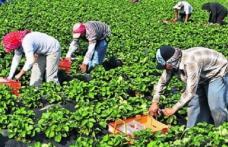 Locuri de muncă sezonieră în agricultură - Spania - Campania 2019