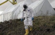 Caz de antrax, descoperit după primele analize la un viţel care a murit pe o păşune din Botoşani