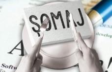 Trei la sută este rata șomajului înregistrat în evidențele AJOFM Botoșani în luna septembrie 2018