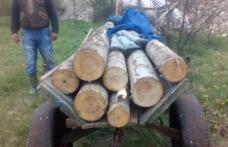 Căruță plină cu lemne confiscată de polițiști la Tudora
