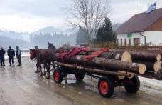 Lemne de foc fără documente legale, confiscate de polițiștii din Pomârla