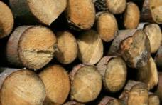 Prins de polițiștii din Pomârla cu material lemnos fără documente