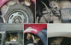 Primim la redacție – Claxonați înainte de a porni mașina. Câteva secunde poate salva vieți – FOTO