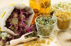 Tratamente din plante pentru o digestie sănătoasă