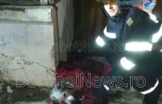 Din nou eroi pentru necuvântătoare! Câine salvat de pompierii dorohoieni - FOTO