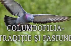 """Muzeul de Științele Naturii Dorohoi găzduiește expoziția temporară """"Columbofilia – tradiție și pasiune"""""""