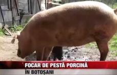 Autoritățile județene fac un nou apel către botoşăneni privind Pesta Porcină Africană