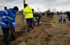 """""""Luna plantării arborilor"""" continuă cu o nouă acțiune, de această dată la Vârfu Câmpului – FOTO"""