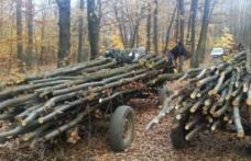 Material lemnos fără documente confiscat la Horlăceni