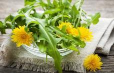 De ce este indicat să consumăm primăvara salată de păpădie
