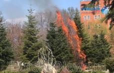 Incendiu în Parcul Cholet din Dorohoi! Mai mulți copaci au luat foc - FOTO