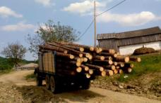 Polițiștii dorohoieni au descoperit un transport illegal de leme făcut cu o mașină care avea actele falsificate