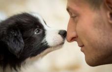 Câinii detectează cancerul cu o acuratete fantastică