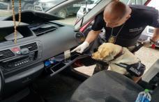 Canabis descoperit de câinele polițist Sheba la Punctul Vamal Rădăuţi Prut