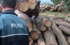 Material lemnos și numere de înmatriculare confiscate de polițiști pe raza comunei Hilișeu Horia