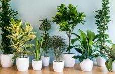 Plante care purifică aerul din locuință