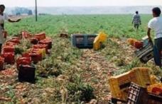 A muncit până la epuizare! Bărbat din Dorohoi MORT în Italia, în timp ce recolta roșii