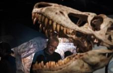"""Descoperire: Tyrannosaurus Rex avea un """"aparat de aer condiționat"""" în craniu"""