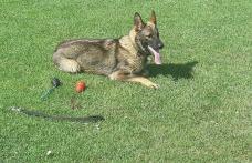 Botoșănean dat dispărut, găsit de Mara, câinele polițist - FOTO