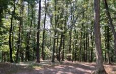 Paradisul virgin din nordul extrem al României. Misterele Stuhoasei din Suharău, codrul secular întins pe 61 de hectare