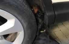 Operaţiune de salvare emoţionantă în Dorohoi. Pompierii au scos un câine blocat între roata și caroseria unui autoturism - FOTO