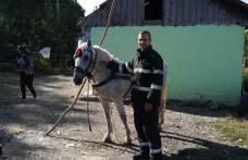 Cal salvat dintr-o groapă de doi metri de pompierii din Darabani - FOTO