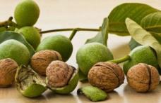 Ce beneficii pentru sănătate au nucile verzi