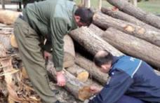 Lemn fără acte, confiscat de polițiști. Administratorul unei societăți a fost amendat